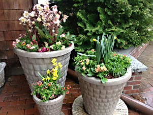 Early Spring Planters