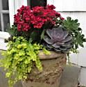 Kalanchoe and Succulents Planter