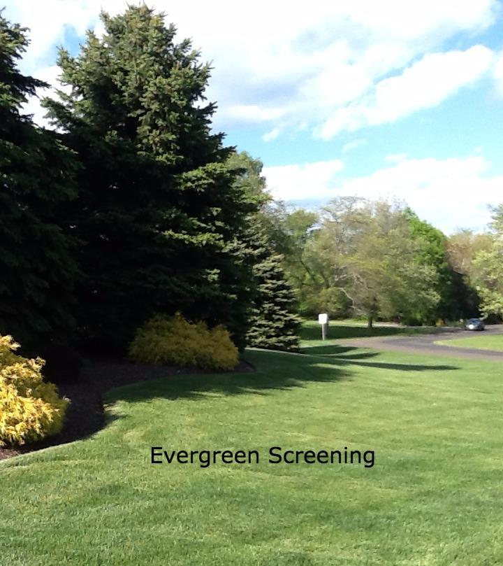evergreen screening-TFLC_edited