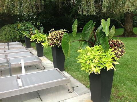 Potted annuals Longmeadow Landscape Design