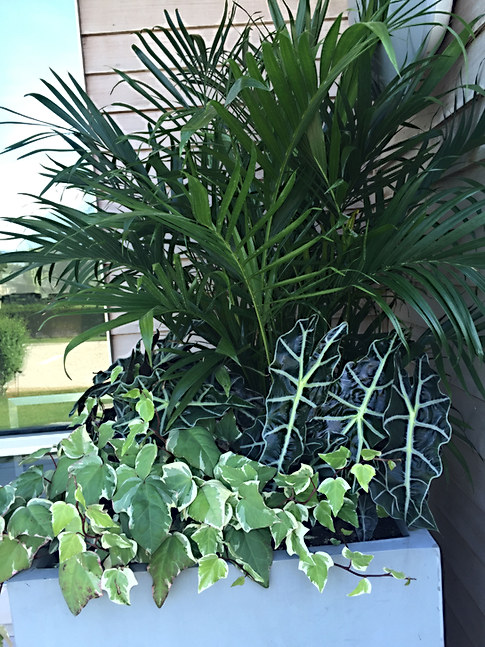 Palm and Caladium Planter