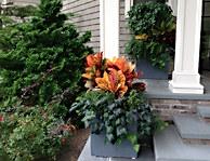 Croton Planter