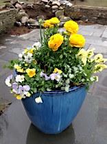 Yellow Pastel Planter