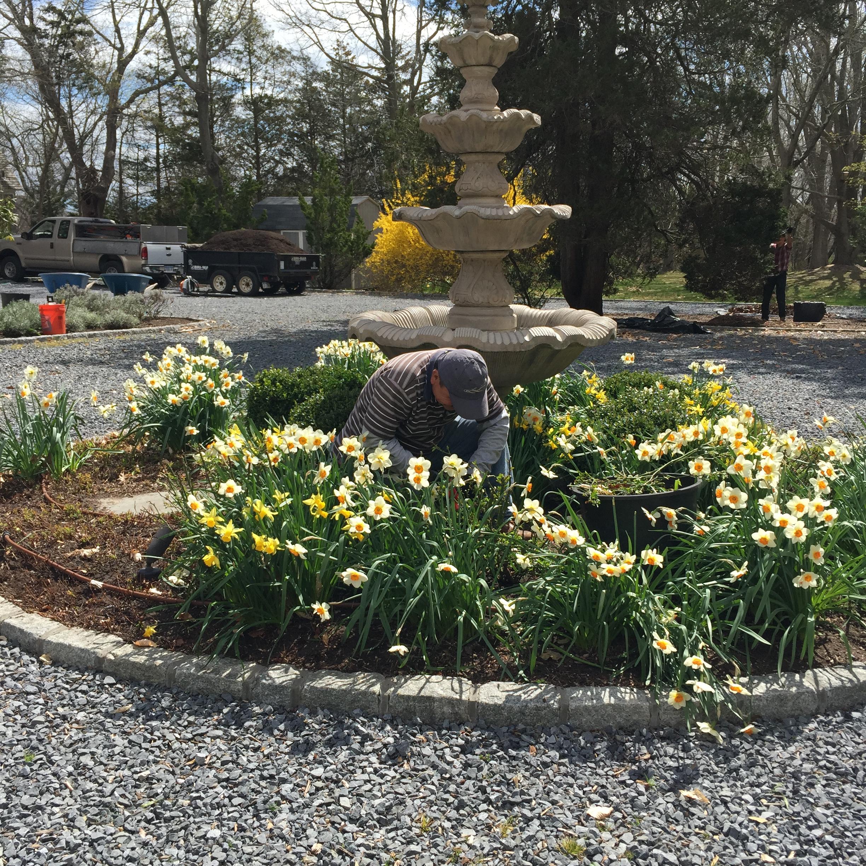 Spring Bulbs in Full Bloom