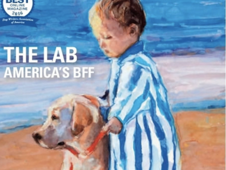 The Labrador Retriever, America's BFF