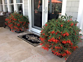 Gorgeous Red Planters