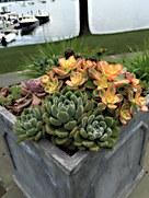 Succulents Waterside