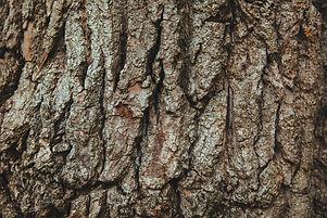 wood-tree-bark-english-oak.jpg