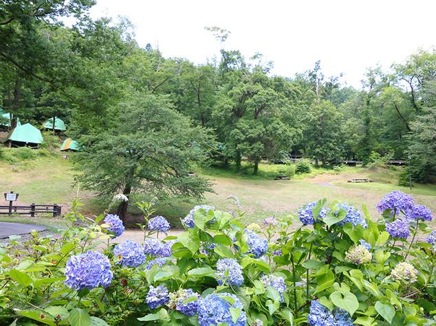 鷹の巣キャンプ場_サイト見上げ横.jpg
