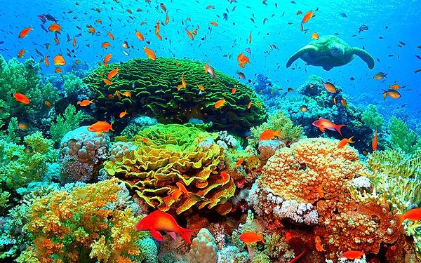 billionaires island reef habitats.jpg