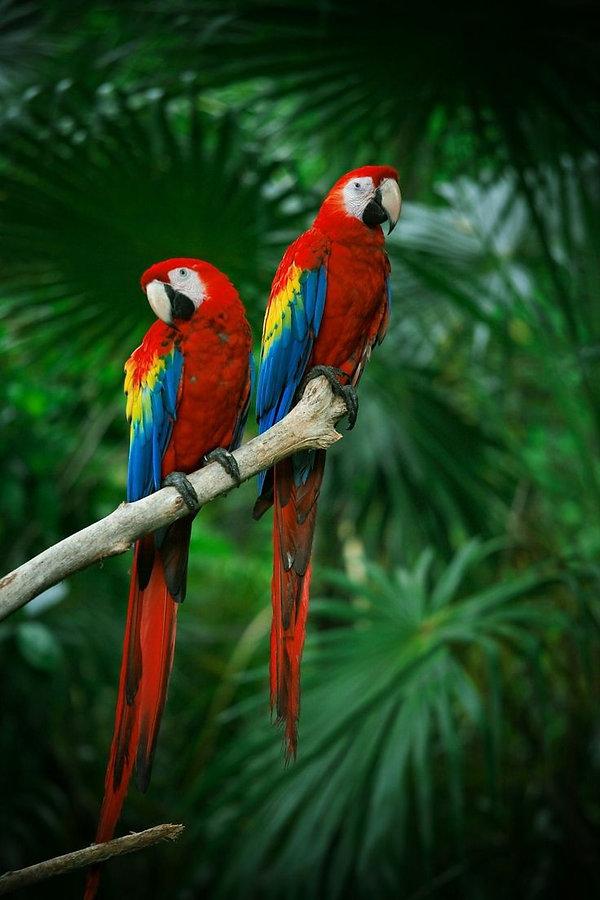 Exotic birds on Billionaires Island (5).