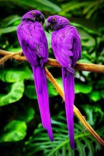 Exotic birds on Billionaires Island (2).