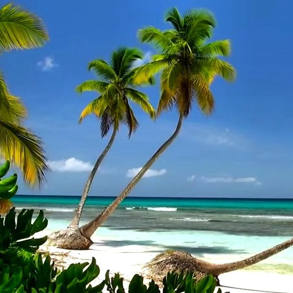 BEACHES & GARDENS BILLIONAIRES ISLAND (8