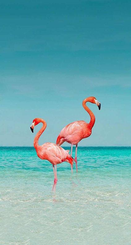 BILLIONAIRES ISLAND BEACHES & GARDENS (6