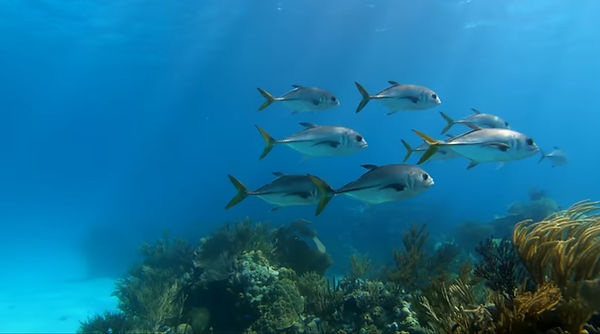 billionaires island new marine life  (1)
