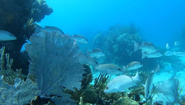 billionaires island new marine life  (2)