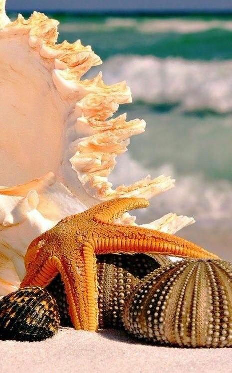 BILLIONAIRES ISLAND BEACHES & GARDENS (9