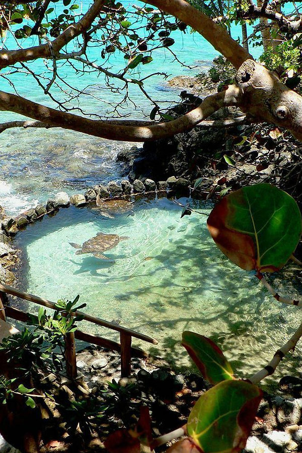 BILLIONAIRES ISLAND BEACHES & GARDENS (1