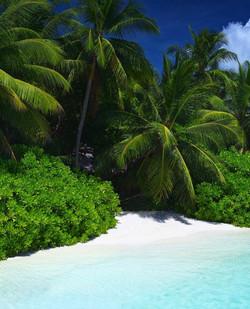 Billionaires Island  (19)