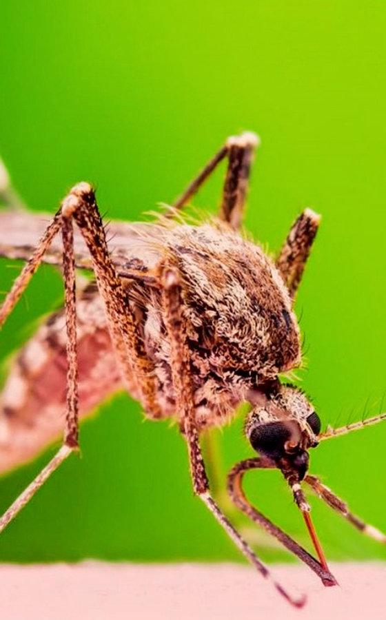 mosquito-control-pasco.jpg