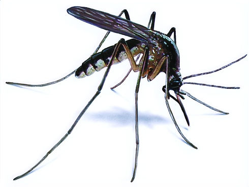 mosquito-control-660x495_edited.jpg