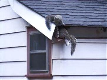 squirrelseaves_edited.jpg