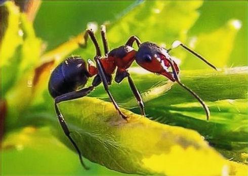 sugar-ants-land-o-lakes_1_edited.jpg