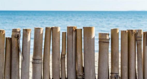 bamboo-fence-coast-sea-sky-5624271-682x1024_edited.png