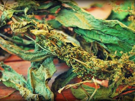 Herbalism 101: Tea, Herbs & History