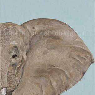 De olifant aan de hoge kant.jpg
