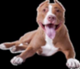 dog-background-29.png
