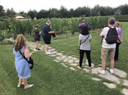 A lesson in wine-growing in Tuscany