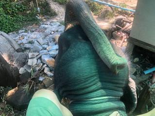 タイで象乗り体験