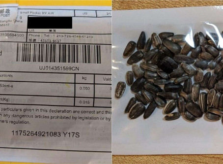 Mystery seeds from China identified