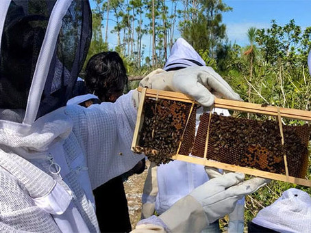 Beekeepers in The Bahamas receive funds to rebuild apiaries