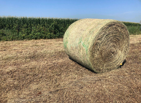 USDA  announces changes to emergency haying and grazing provisions