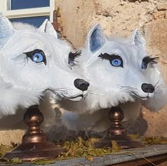 Paire de loups blancs