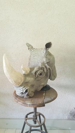 Rhinoceros pg