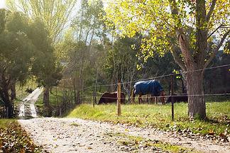 Around the property-15.jpg