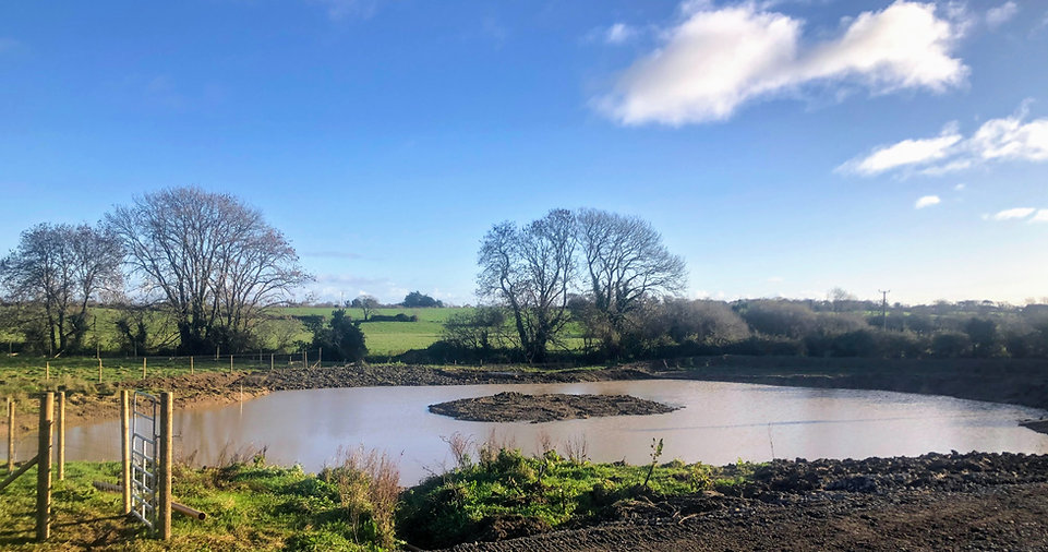 Large New Wildlife Pond created November 2020 at Wildacres.