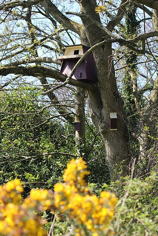 Barn Owl Nestbox