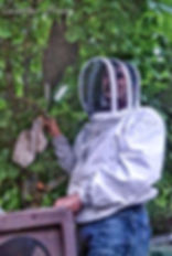 Collecting a Honeybee swarm in a tree