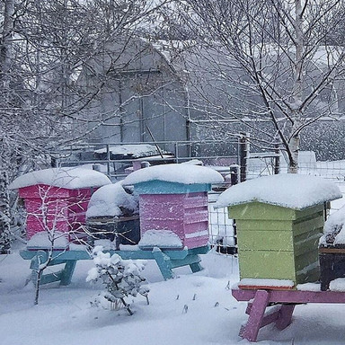 Airfield Hives during a Winter Snowfall