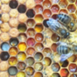 Colourfull stored Pollen