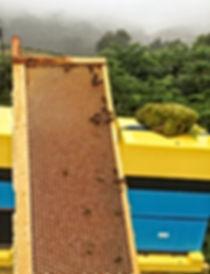 Uncapped Frame of Heather Honey.jpg