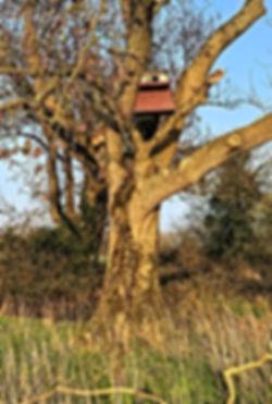 Owl Nestbox.jpg