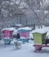 Airfield Hives in Snow Feb.2018.jpg