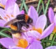 Queen Bumblebee in Airfield Estate
