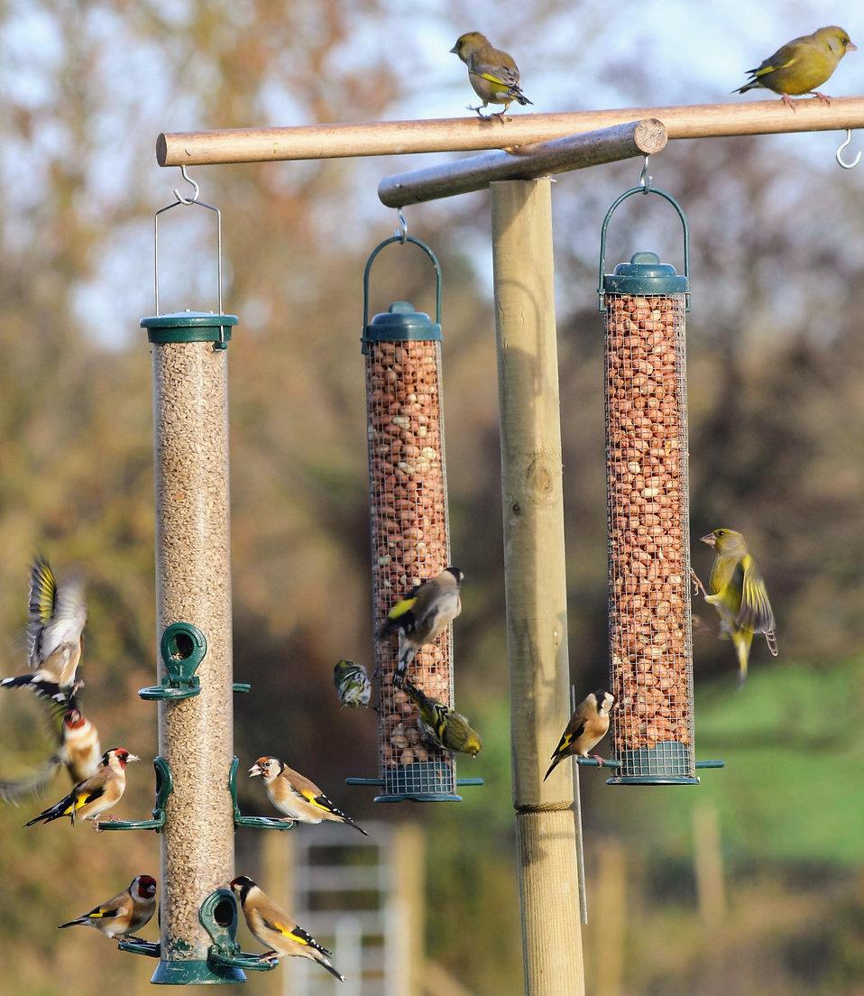 Array of birds on a homemade bird feeding station at Wildacres.