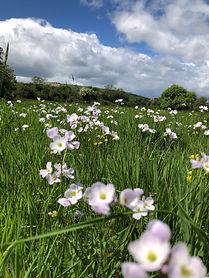 Wildflowers at Wildacres